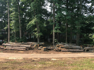 Tree Removal throughout Golf Course